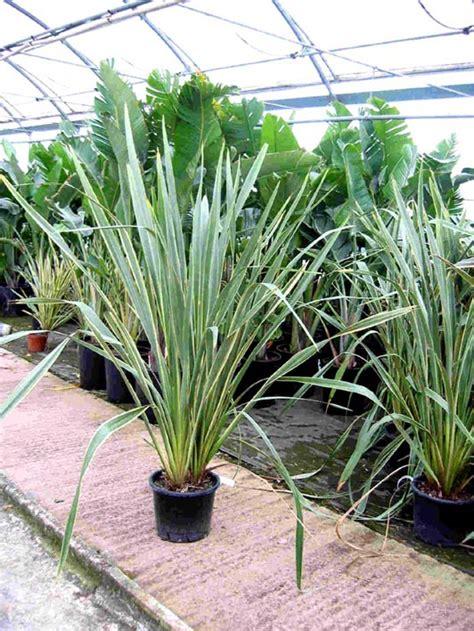 Plantas Exterior Resistentes Frio Y Calor Simple Arbustos De - Plantas-exterior-resistentes