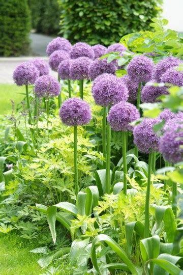 Plantas Para Jardineras SEONegativocom